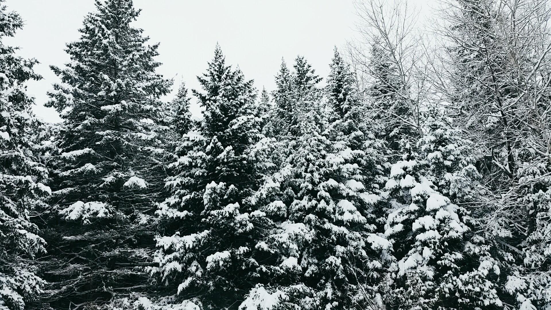 Überall ist Schnee
